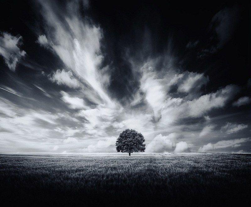 Дерево, Небо, Облака, Поле, Черное белое Облачноphoto preview