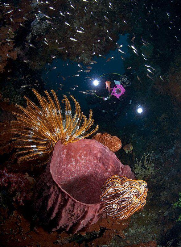 В подводной пещереphoto preview