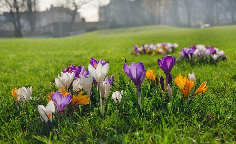 Весна пришла!photo preview