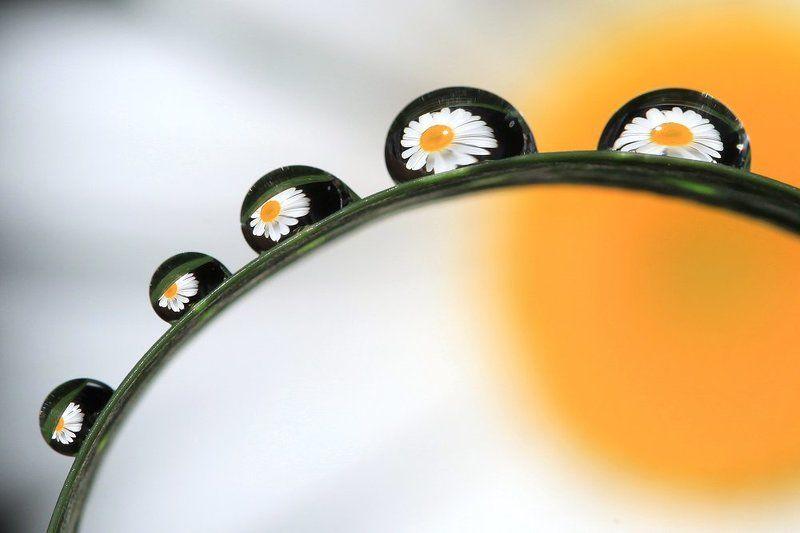 ромашка, капли, капля, ромашки, отражение, лето, макро Весеннее настроениеphoto preview