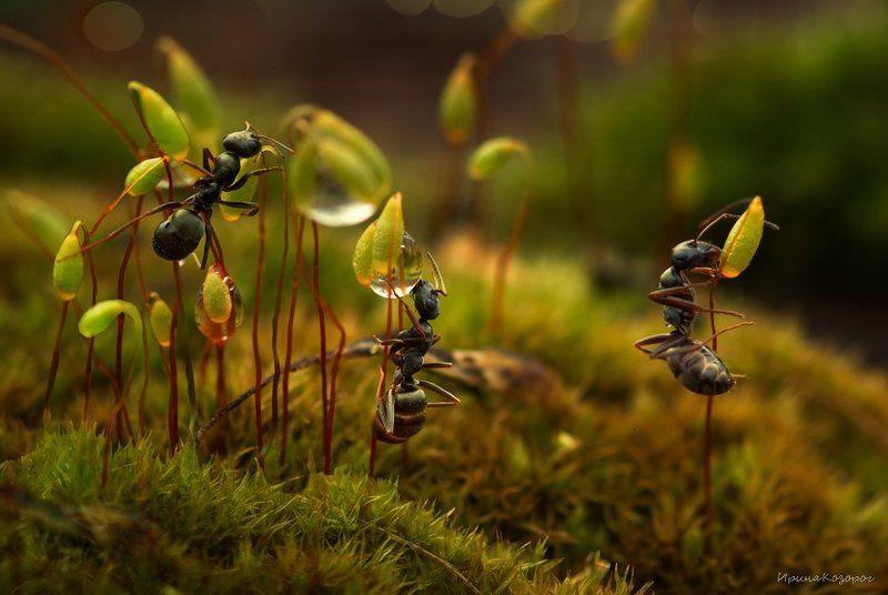 Три муравья в одном лесу ...photo preview