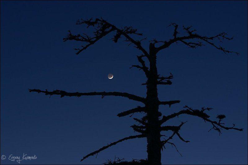 Дерево, Луна, Ночь, Сахалин Молодая луна и мертвое деревоphoto preview