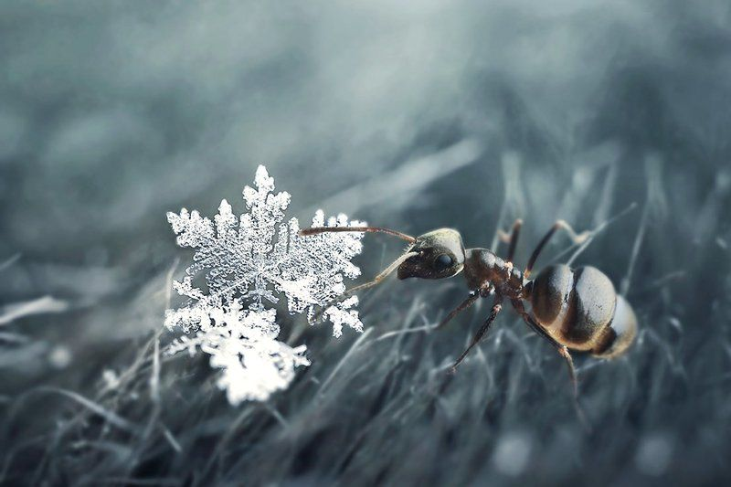 зима и весна встретилисьphoto preview