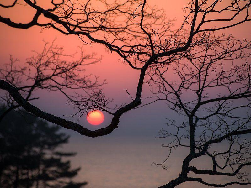 Pink, Sky, Sunrise, Tree Солнечная колыбельphoto preview