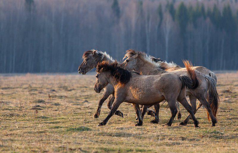 Лошади на лугах Дундуруphoto preview