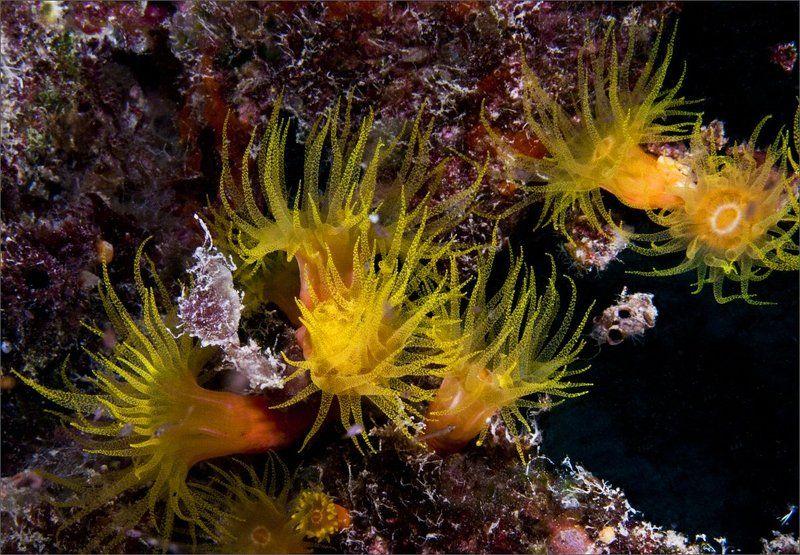 Микронезия, Палау Сны о теплом мореphoto preview