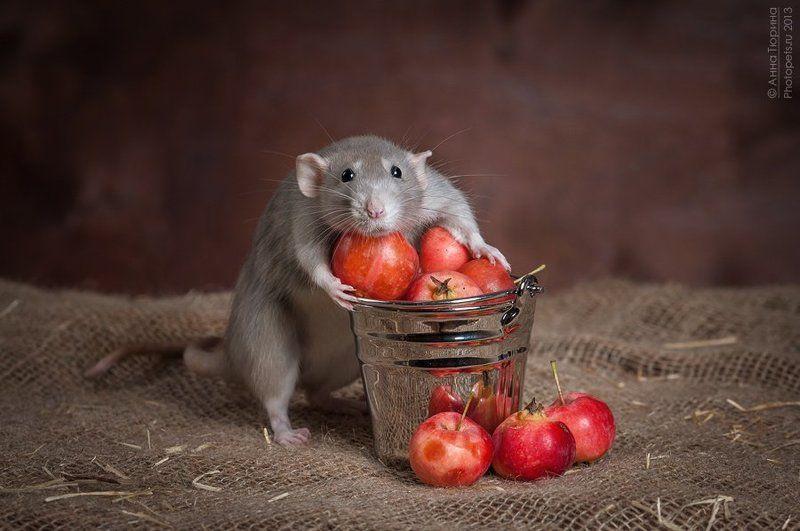 Яблочки не удержать :)photo preview