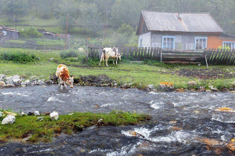 Утро в деревнеphoto preview