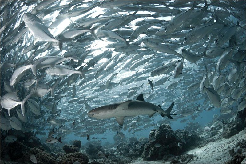 Diving, Malaysia, Sipadan island, Underwater photography photo preview