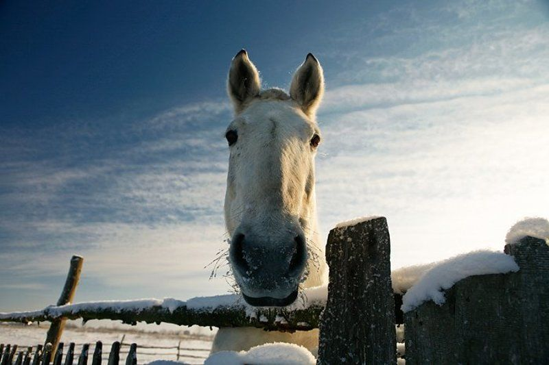 коник, лошадь, зима, гринево ***photo preview