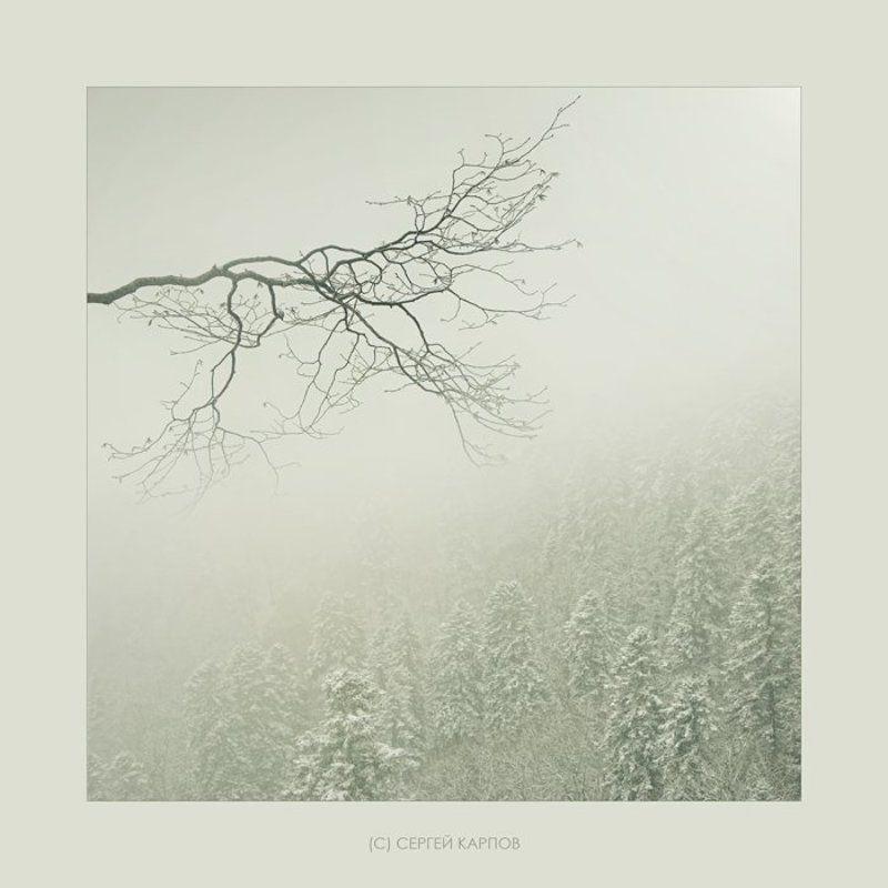 пейзаж, туман, дерево, ёлки Туманнаяphoto preview
