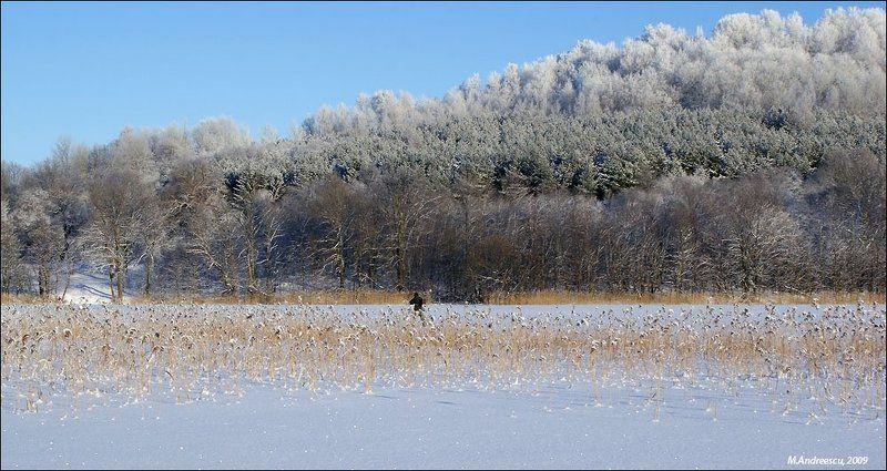 зима, снег, иней, озеро, камыш, рождество, природа Я всем расскажу, что приходила зимаphoto preview