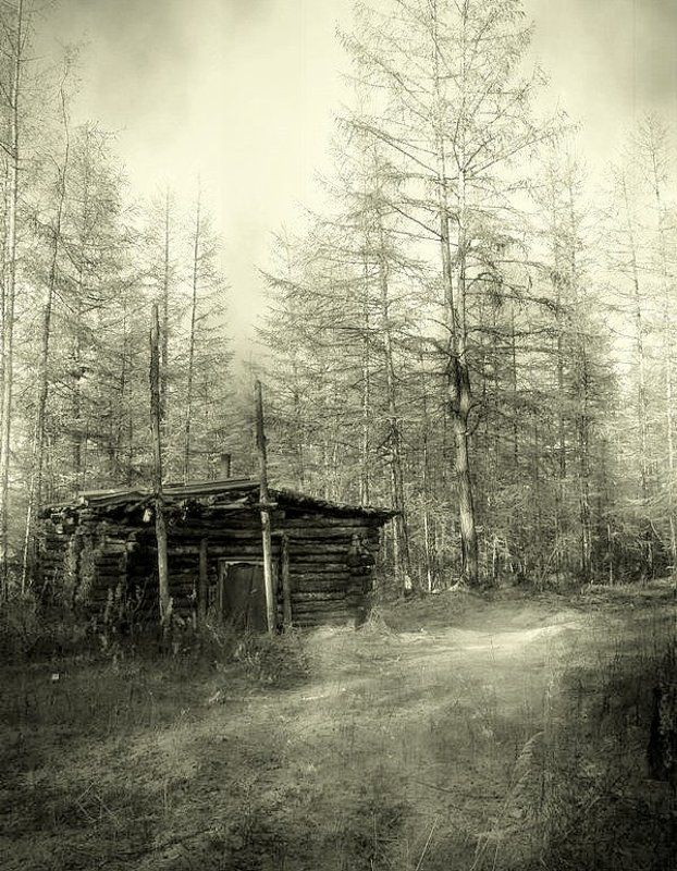 тайга лесные зарисовкиphoto preview