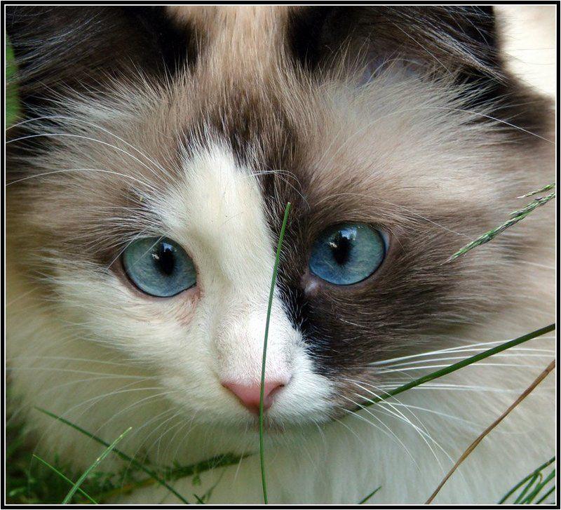 кошка, животные, глаза, автофокусировка Автофокусировка глазphoto preview