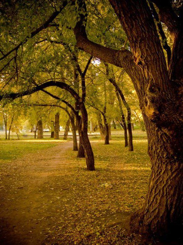 новосибирск,осень,сквер photo preview