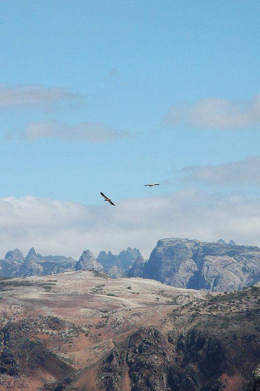 йемен, сокотра полетphoto preview