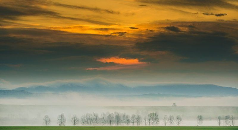sunrise, fog, morning, wood, clouds, wonderful Foggy Cloudsphoto preview