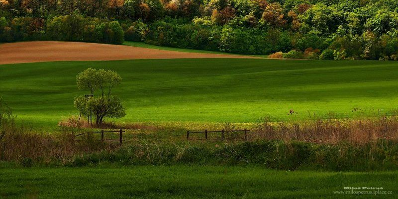 Зеленая долинаphoto preview