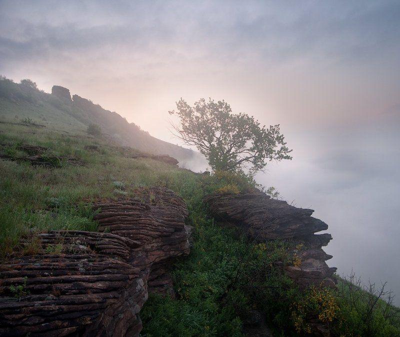 Дерево, Луганск, Перевальск, Туман Первомайphoto preview