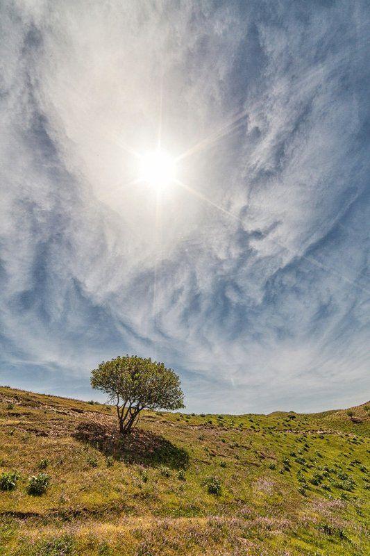 Хатлонский солнцепекphoto preview