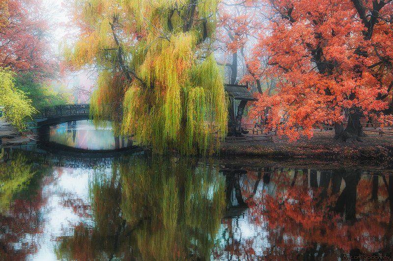 саратов, парк, осень Саратовский городской паркphoto preview