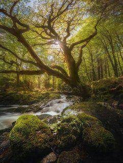 Заколдованное дерево