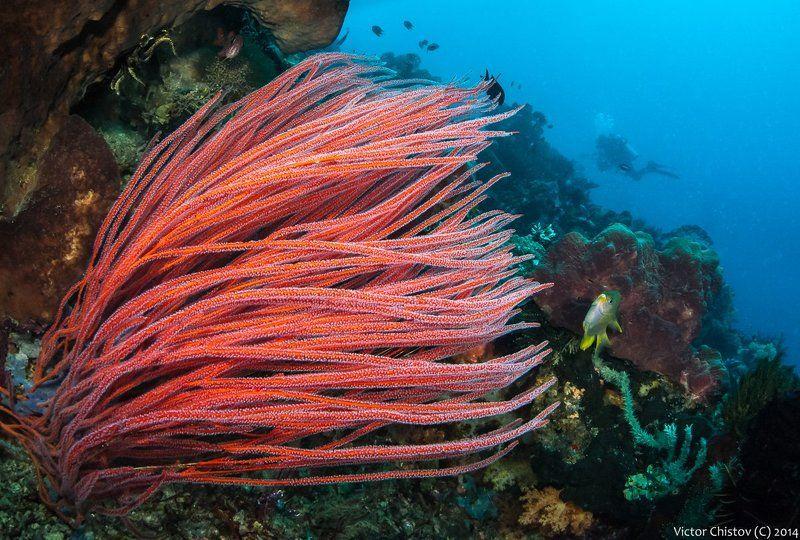 underwater, coral В красномphoto preview