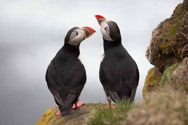 про то, как однажды попугаи прилетали в гости к пингвинам...photo preview