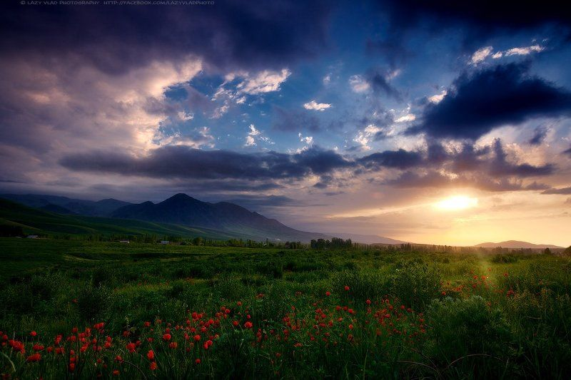Bishkek, Flowers, Kyrgyzstan, Landscape, Lazyvladphoto, Lazy_vlad, Mountains, Spring, Sunset, Бишкек, Весна, Горы, Закат, Киргизия, Маки, Пейзаж, Цветы Сокровища Весныphoto preview