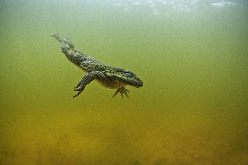 Underwater Прищурив глазаphoto preview