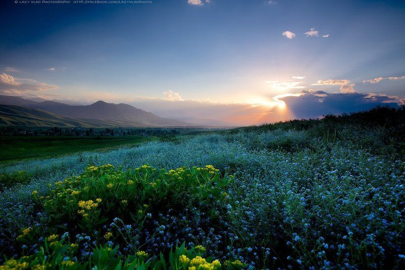 Весенний цветphoto preview