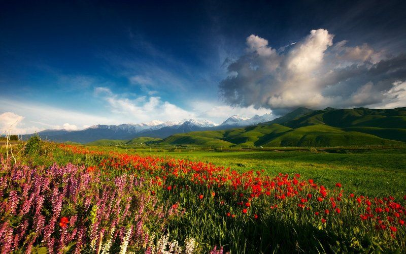Ala-archa, Alamedin, Bishkek, Flowers, Kyrgyzstan, Landscape, Lazyvladphoto, Lazy_vlad, Mountains, Poppies, Ала-арча, Бишкек, Весна, Горы, Киргизия, Кыргызстан, Маки, Цветы Весенняя безмятежностьphoto preview