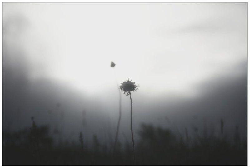 Alone, Bw, Gray Grayphoto preview