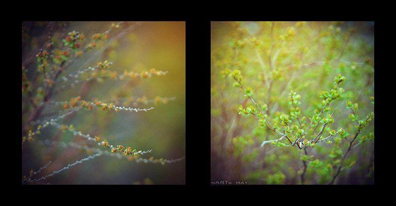 Nikon, Лето, Природа Лето в квадратеphoto preview
