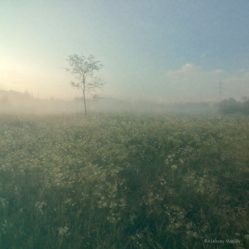 fogphoto preview