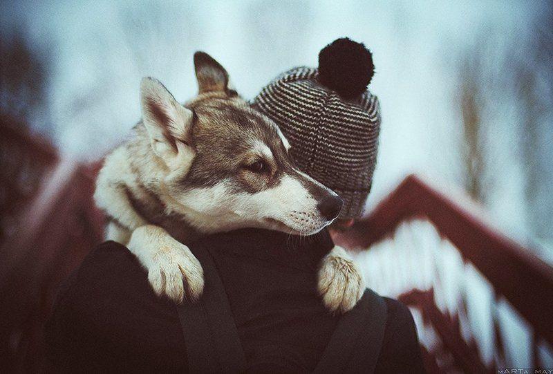 Nikon, Дружба, Животные, Портрет, Собака, Хаски Друзьяphoto preview