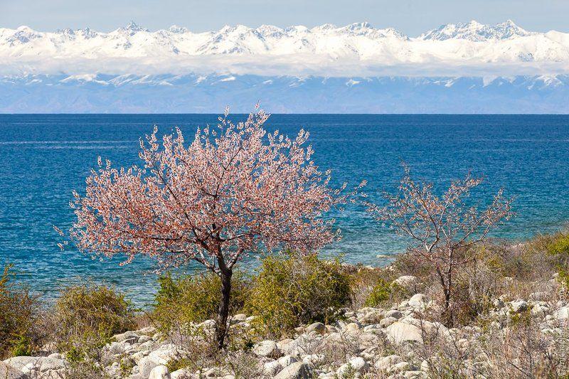 Весна в Киргизииphoto preview