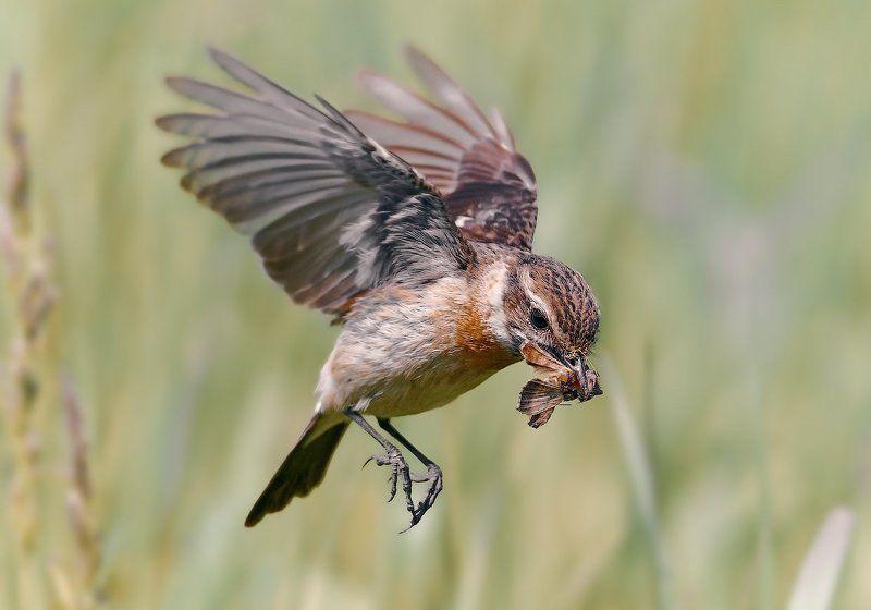 Vogel, Полёт, Птицы ***photo preview