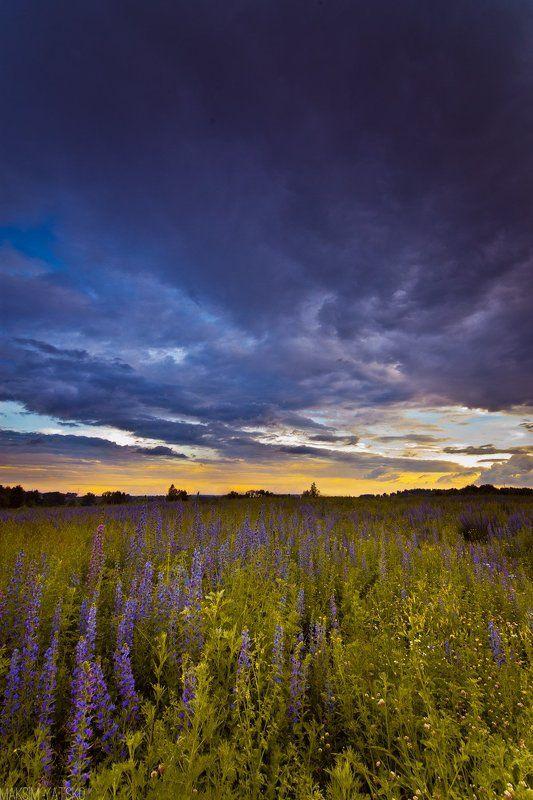 Clouds, Clouds decline flowers landscape, Decline, Flowers, Landscape, Sky, Прокопьевск Вечернее небо.photo preview