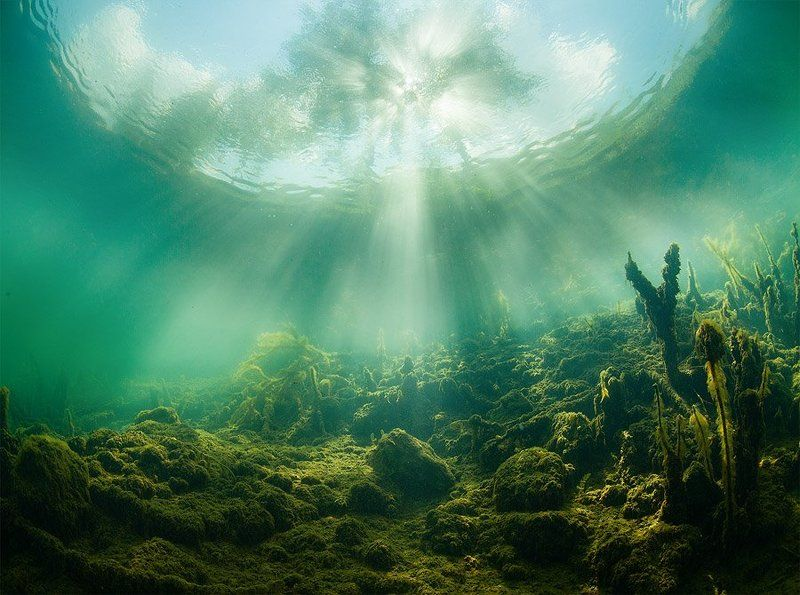 Green, Plants, Russia, Sun, Tree, Underwater, Water Two worldphoto preview