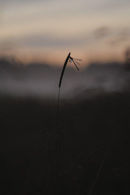 в вечернем туманеphoto preview