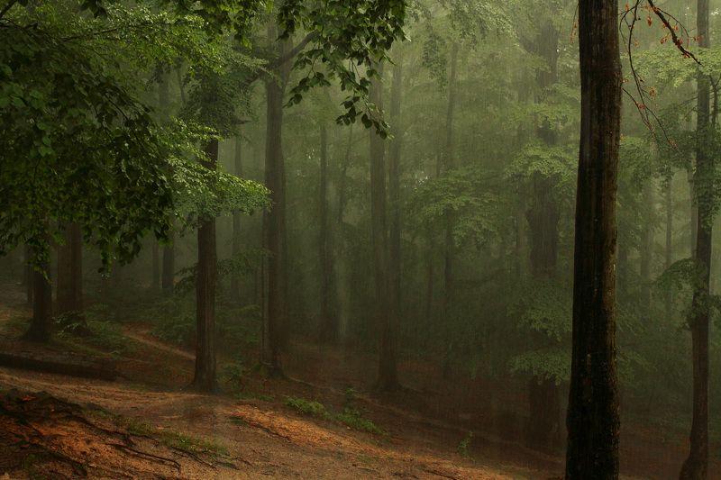 Дождь...photo preview