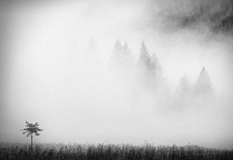 карпаты, туман, дерево ...бн...photo preview