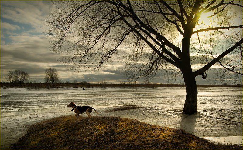 река, собака, дерево, солнце, март, 2007 \