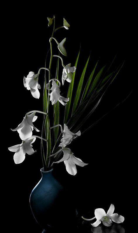 Орхидейныйphoto preview