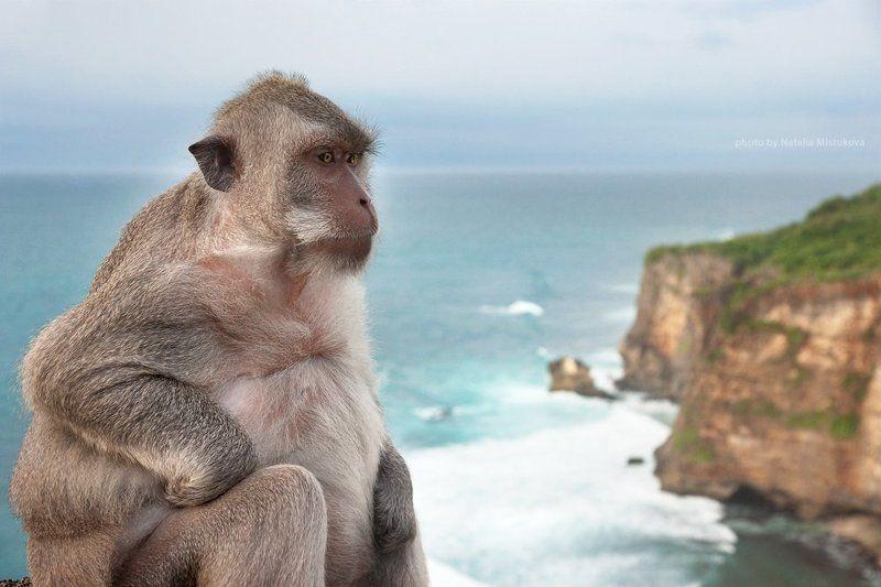 обезьяна, бали балийский мыслительphoto preview