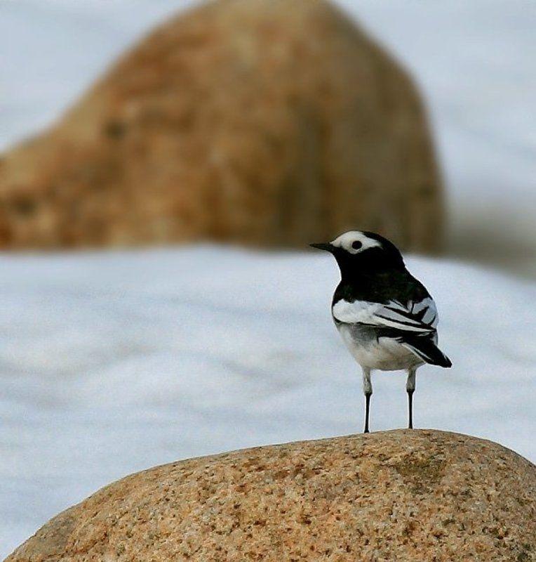 Птичка на спичкахphoto preview