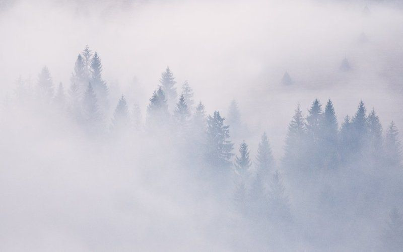 карпаты, туман, лес, стожки ...4 стожка...photo preview