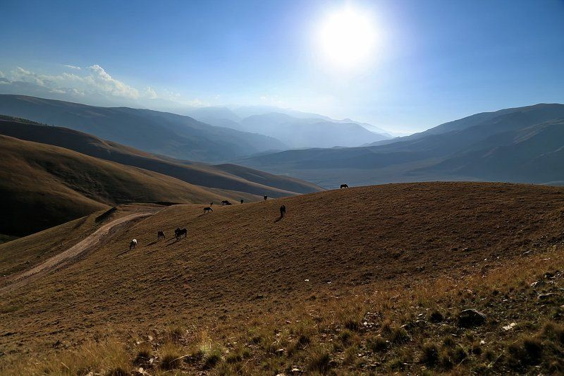 , , алатау, заилийское, казахстан photo preview