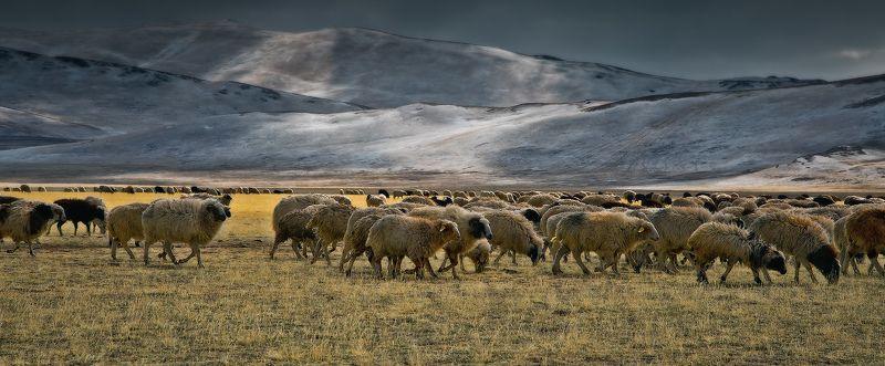 Central Asia region, Flock of sheep, Горы, Животные, Отара, Отроги, Пасмурно, Пастбище, Пейзаж, Природа, Степь отараphoto preview